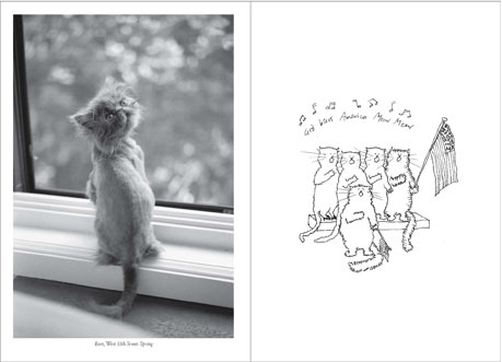 thecatwalkcats_2